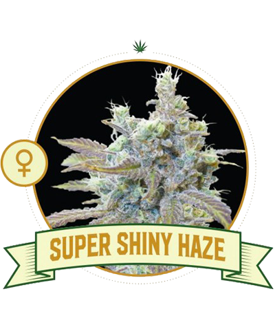 "CITY SEEDS BANK ""Super..."