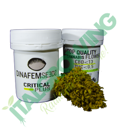 Dinafem - Critical Plus 1 gr.