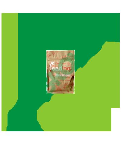 GREEN HOUSE - Powder Feeding Bio Bloom 2,5 KG Greenhouse Seed Bank 113,90€