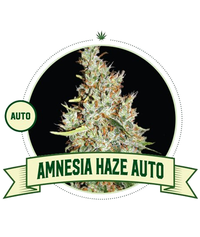 "CITY SEEDS BANK ""Amnesia..."