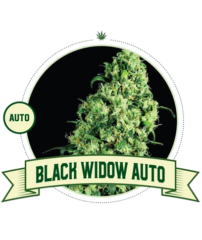 "CITY SEEDS BANK ""Black..."