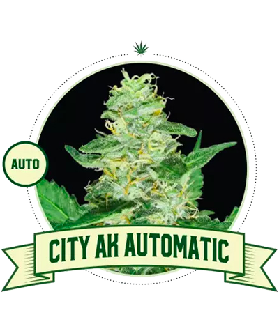 "CITY SEEDS BANK ""City Ak"" Auto"