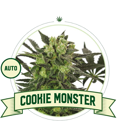 "CITY SEEDS BANK ""Cookie..."