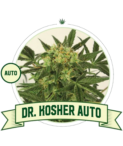 "CITY SEEDS BANK ""Dr.Kosher""..."
