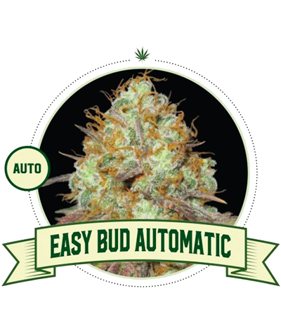 "CITY SEEDS BANK ""Easy Bud""..."
