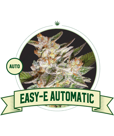 "CITY SEEDS BANK ""Easy-E"" Auto"