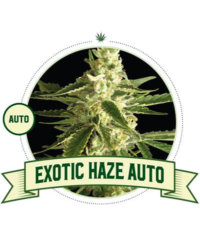 "CITY SEEDS BANK ""Exotic..."
