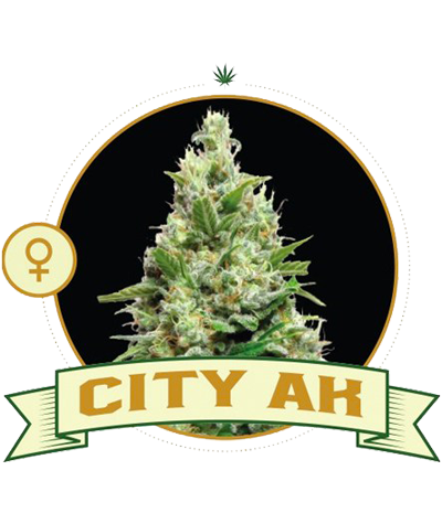 "CITY SEEDS BANK ""City Ak"""