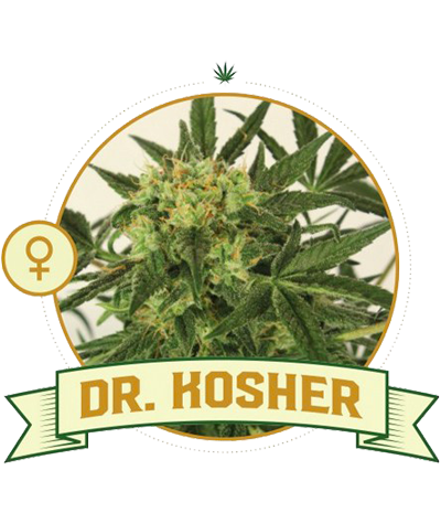 "CITY SEEDS BANK ""Dr. Kosher"""