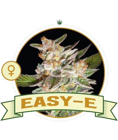 "CITY SEEDS BANK ""Easy-E"""