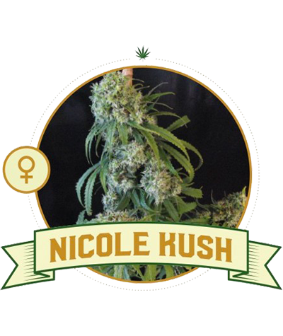 "CITY SEEDS BANK ""Nicole Kush"""