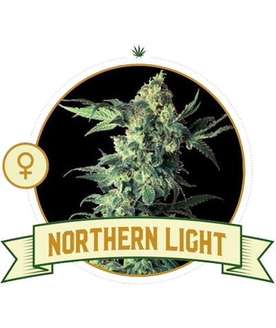 "CITY SEEDS BANK ""Northern..."