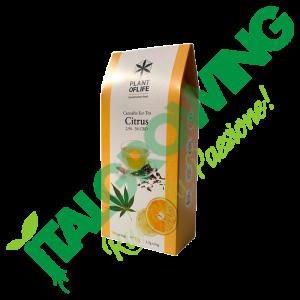 Infuso di Tè al Limone al CBD Plant of Life  6,00€