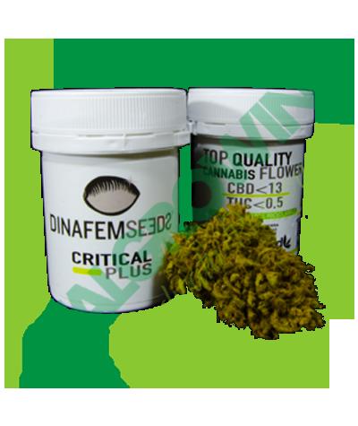 Dinafem - Critical Plus 1 gr. Dinafem Seed 13,00€